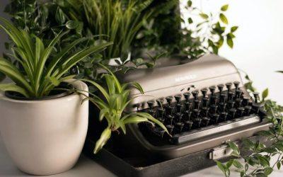 A HOUSE PLANT ANYONE CAN GROW